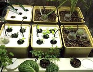 الكليب لتجربة زراعة الخضراوات العضوية داخل المنازل