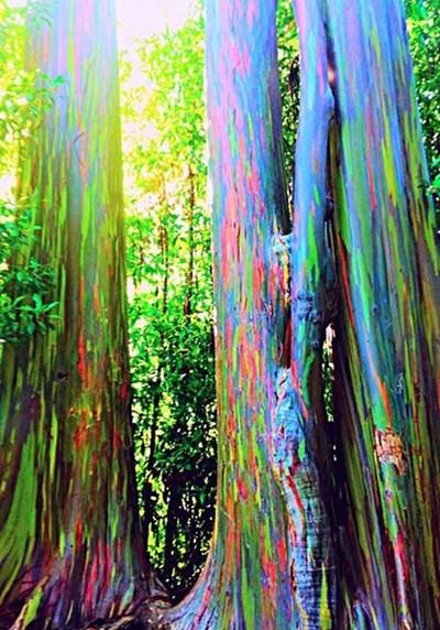 """بالصور.. أشجار """"فضائية"""" الأغرب العالم"""