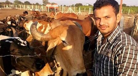 بالصور مسابقة لأجمل سيلفي مع الأبقار في الهند