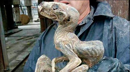 العثور على مخلوق غامض داخل منجم ألماس في سيبيريا 676978-1.jpg?width=450