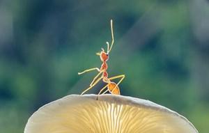 صور مذهلة.. تعرّف على المجالات التي يتفوق فيها النمل على الإنسان