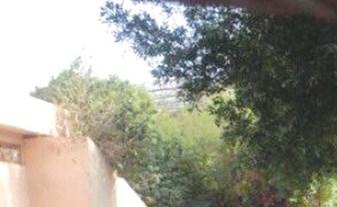 العطية لـ «الأنباء»: «حديقة الحيوان» تتمتع بأعلى معدلات الأمان وقفز الزائر داخل قفص الدب.. غير مسؤول