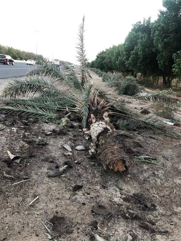 إصابة مواطن فى حادث تصادم على طريق الملك فهد