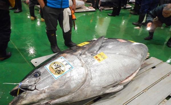 سمكة تونة تباع بأكثر من 20 مليون ين في مزاد باليابان