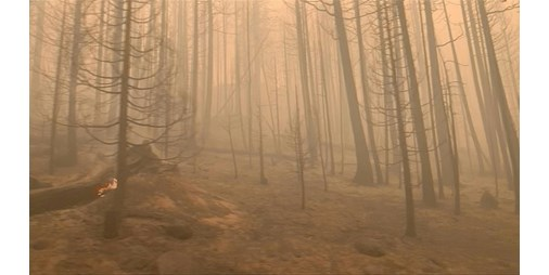 """بالفيديو.. """"ديكسي فاير"""" المستعر يصبح ثالث أكبر حريق في تاريخ كاليفورنيا"""